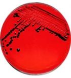среда Кесслера -ГРМ (0.25 кг)